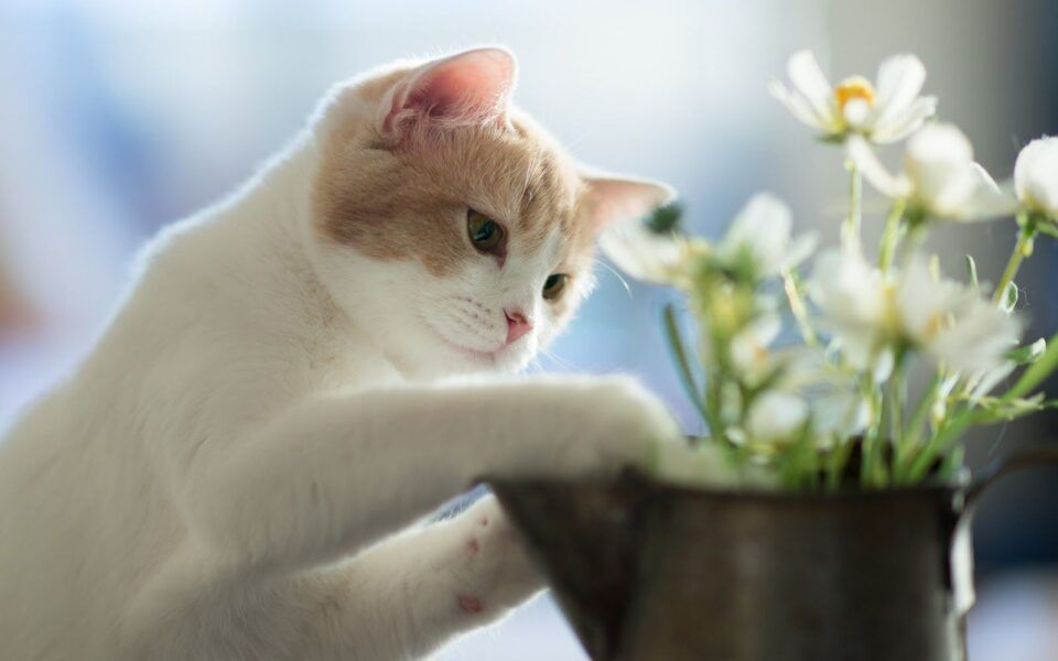 Plantas seguras para gatos: opções não tóxicas para os pets