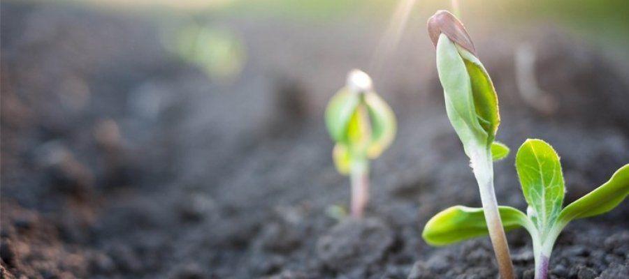 O que é germinação: etapas de desenvolvimento das sementes