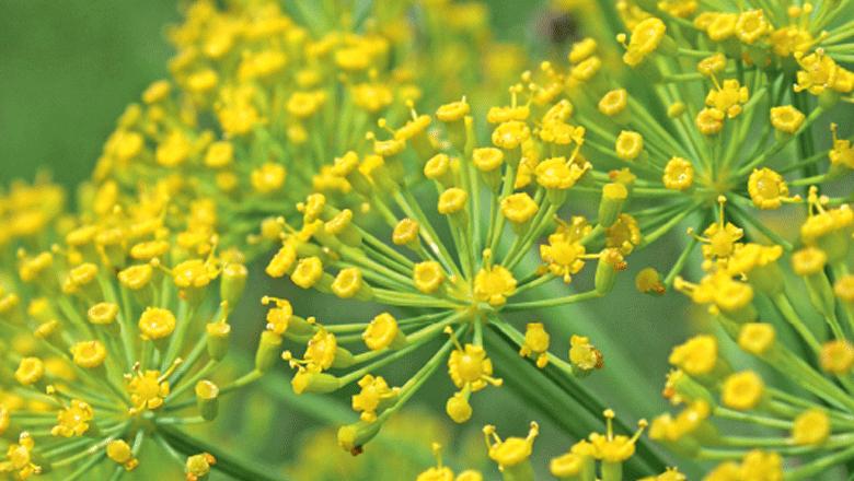 Plantas medicinais: conhecendo espécies e como usar cada uma